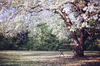 public-domain-images-free-stock-photos-tree-blossoms-bench-1